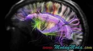 GF2045 Brains avatares android y el futuro de la humanidad 2